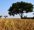 Los productores navarros gastaron 10,9 millones en asegurar sus cultivos