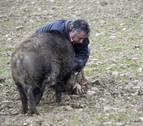 Recogida con jabalí y perro y mercado marcarán la Feria de la Trufa en Navarra