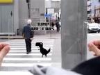 El videojuego que se ha vuelto offline y revoluciona las calles