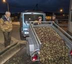 La recogida de la oliva apura sus últimos días en el trujal Mendía, en Arróniz
