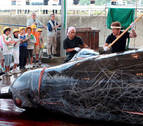Japón se retira de la comisión que busca la preservación de las ballenas