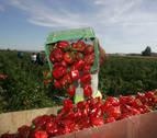 Agricultura, sector clave a la hora de generar empleo en Caparroso