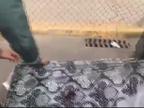 Hallan en la frontera de Melilla dos inmigrantes ocultos dentro de colchones
