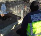 Detenidas 182 personas en un campeonato ilegal de peleas de gallos en Murcia