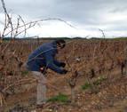 Malestar en Andosilla por la exclusión de 200 ha del Canal de Navarra