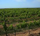 El Consorcio de la Zona Media recibe 40.000 € para la Ruta del Vino
