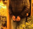 Seis detenidos que cultivaban marihuana en Toledo y vendían en otros países