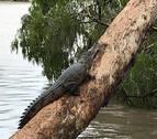 Avistan cocodrilos de tres metros en calles inundadas del noreste de Australia