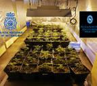 Dos detenidos por tráfico de drogas y desmantelado un punto de venta en Pamplona