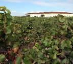 El Gobierno implanta medidas apoyo al sector vitivinícola por 4,3 millones