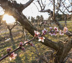 Las cosechas de uva, fruta y almendra, en riesgo ante las previsibles heladas