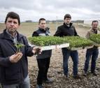 """Javier Burgui: """"Si no se planta tomate no podremos contratar a 30 personas para trabajar"""""""