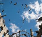 Las cigüeñas viven en una bodega y en una vieja fábrica de remolacha