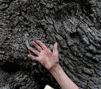 En la piel de un árbol milenario