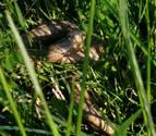 Carteles, hierba cortada y tranquilidad por la culebra avistada en Mutilva