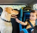 Tus mascotas seguras en el coche