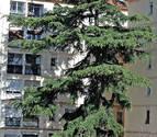 El pino que 'entorpece' a los vecinos de Blas de la Serna, en la Milagrosa