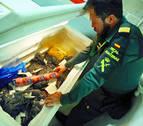 El trabajo de la Guardia Civil en el aeropuerto de Pamplona para incautarse de alimentos