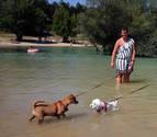 Prohibidos los perros sueltos en Alloz
