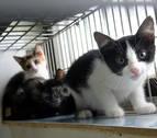 El abandono de mascotas deja 'huérfanos' a 300.000 animales en España