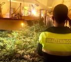 Proyecto Hombre alerta sobre la alta accesibilidad al cannabis