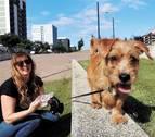 Imputan a dos jóvenes por lanzar un perro desde un puente en Funes