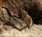 Mendillorri acoge a sus vecinos roedores