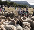 El 'Artzai Eguna' de Uharte Arakil reconocerá la labor de las pastoras