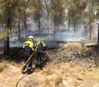 Extinguido el incendio de un pinar de Tafalla que movilizó a bomberos de cinco parques