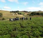La patata de siembra ecológica da buenos resultados en los valles del Pirineo