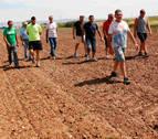 Agricultores de Ribaforada denuncian daños de los conejos en sus cultivos