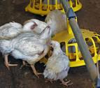 Mueren 25.000 pollos en un incendio en una granja en Granada