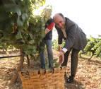 Actividades en 'bosques y viñedos de misterio', este otoño en Navarra