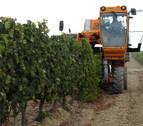 Navarra generaliza la vendimia de 50 millones de kilos de uva de Rioja