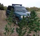 Incautadas 10 plantas de marihuana en terrenos públicos de Ayegui, Artavia y Eulate
