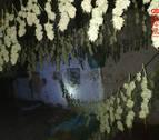 La Policía Foral se incauta de 63 plantas de marihuana y localiza un secadero en Alsasua