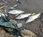 """Nuevo caso de """"muerte masiva"""" de peces en La Estanquilla de Corella"""
