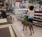 Los perros también van de compras en Pamplona