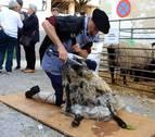 Eulate pone en valor el trabajo de los pastores de Améscoa
