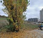 Esporrín (PSN) apoya construir viviendas en la ripa de Erripagaña