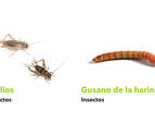 El CNTA de San Adrián incluye grillos y gusanos en su lista de ingredientes emergentes