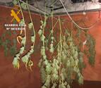Intervenidos 3 kilos de marihuana en dos actuaciones en Azagra y Milagro
