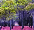 La tala de 75 ha de pinar en Lerín despierta críticas entre los vecinos