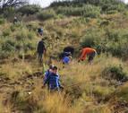 Los vecinos de Artajona trabajan juntos para repoblar sus montes