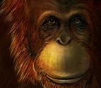 Descubren que el 'Gigantopithecus' era pariente lejano del orangután