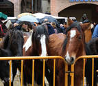 Repuntan las ventas de ganado y se quedan en su mayor parte en Navarra