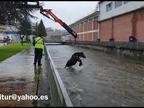 (CON VÍDEO) Increíble rescate de una yegua en Leitza