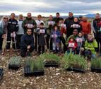 Reforestación en el entorno de la balsa del Pulguer