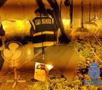 Dos detenidos y una plantación de marihuana desmantelada en Pamplona