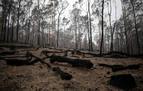 Los incendios han matado a más de 1.000 millones de animales en Australia